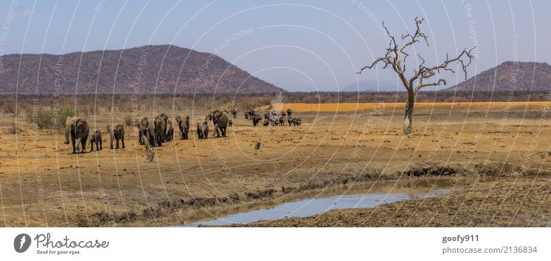 Wandertag Natur Ferien & Urlaub & Reisen Baum Landschaft Tier Wärme Umwelt Bewegung außergewöhnlich Freiheit Sand Ausflug wandern Erde Wildtier Abenteuer