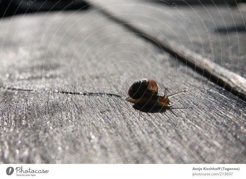 Der lange Weg nach Hause... Natur Tier Holz braun Sicherheit Schutz Vertrauen Ekel Geborgenheit Schnecke Maserung achtsam friedlich schleimig Umwelt