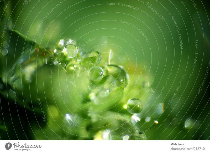 Universum Natur Wasser grün Pflanze Hintergrundbild nass Wassertropfen frisch Kugel leuchten feucht Tau Sonnenlicht Makroaufnahme Blattgrün Wildpflanze
