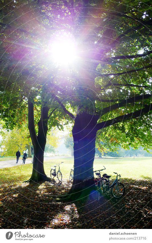Spätsommersonne Baum Sonne grün Sommer Wiese Park hell Fahrrad Ausflug Pause Klima Freizeit & Hobby Schönes Wetter blenden strahlend Blendenfleck