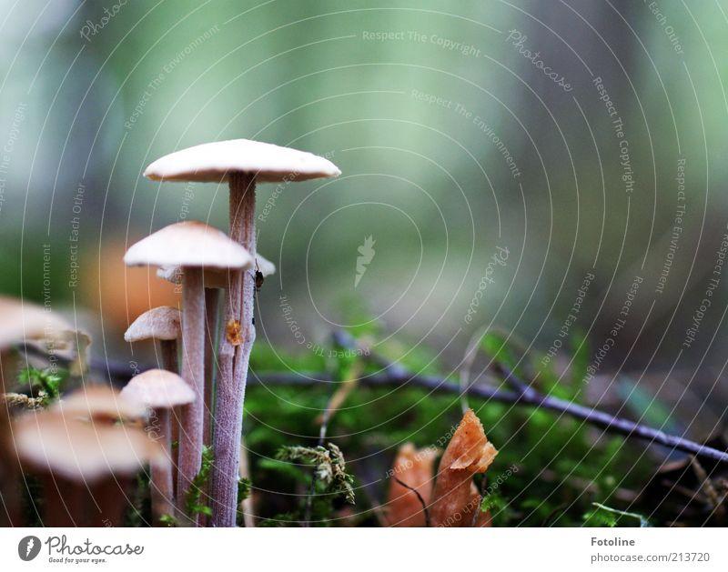Großer Pilz und kleiner Pilz Natur Pflanze Umwelt Herbst hell Erde natürlich mehrere Wachstum Urelemente Moos Waldboden Pilzhut