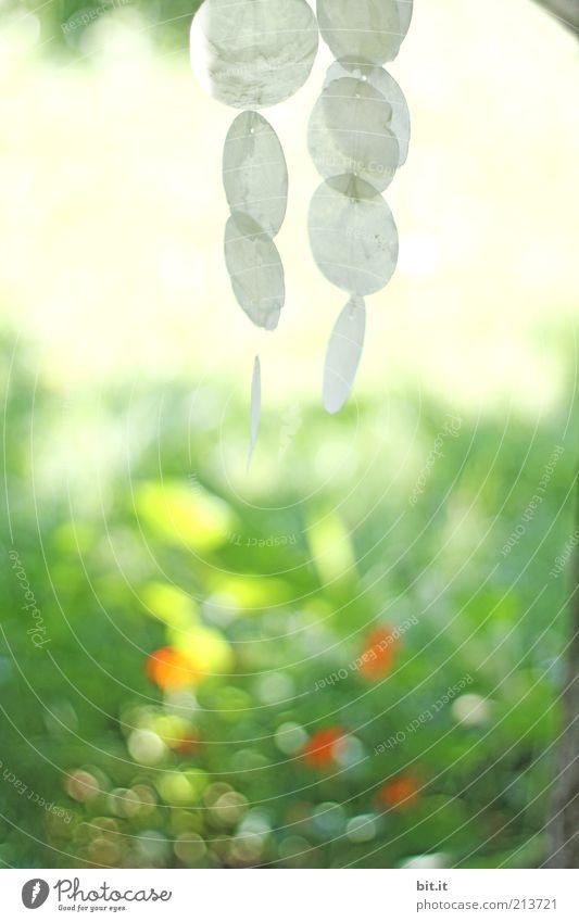 Windspiel für cheffe und schiffi... Natur Sommer ruhig Erholung Frühling rund Dekoration & Verzierung Punkt leicht hängen Schönes Wetter Muschel Leichtigkeit fein Klang