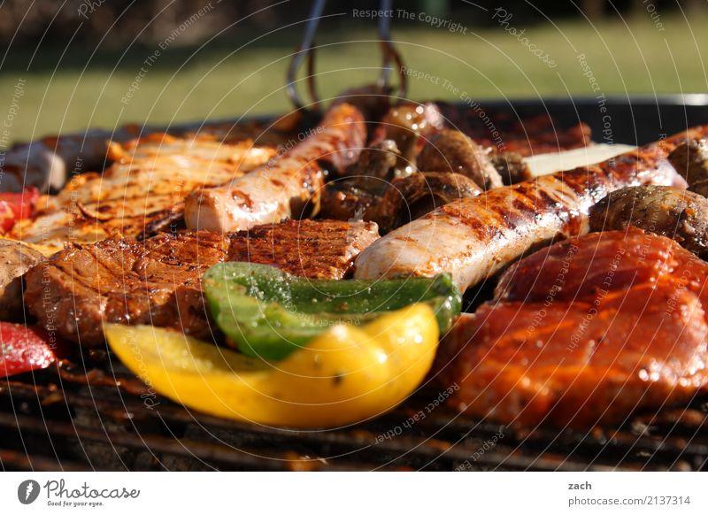 Sommer - Endspurt Lebensmittel Fleisch Kräuter & Gewürze Schweinefleisch Rindfleisch Steak Schnitzel Ernährung Gemüse Paprika Wurstwaren Bratwurst Abendessen