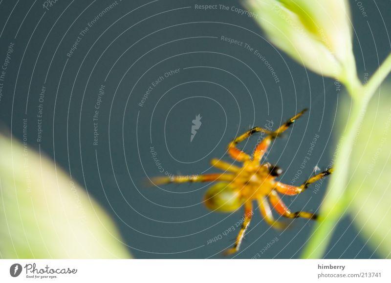 am seidenen faden Umwelt Natur Pflanze Tier Frühling Sommer Baum Blatt Grünpflanze Nutzpflanze Wildpflanze Nutztier Spinne 1 fleißig diszipliniert Ausdauer