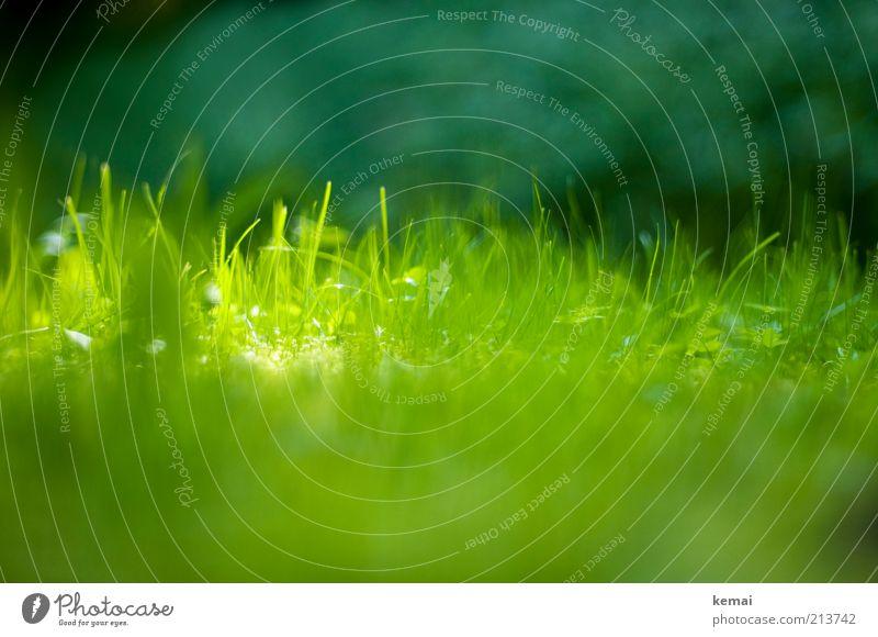 Waldwiese Natur grün Pflanze Sommer Wiese Gras Wärme hell Umwelt frisch Wachstum Schönes Wetter Grünpflanze Wildpflanze