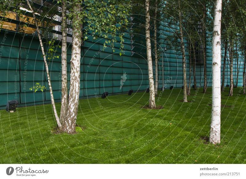 Nordland Architektur Wiese Gras Gebäude Fassade Rasen Norwegen Birke Flutlicht Konsulat Baum