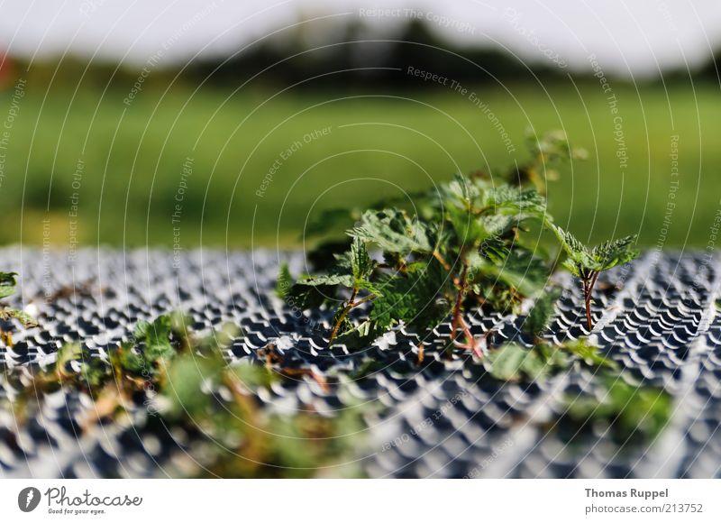 Einsam und verlassen Natur grün Pflanze Blatt Einsamkeit Wiese Gras grau Landschaft Metall Wetter Schönes Wetter Gitter Grünpflanze Wildpflanze