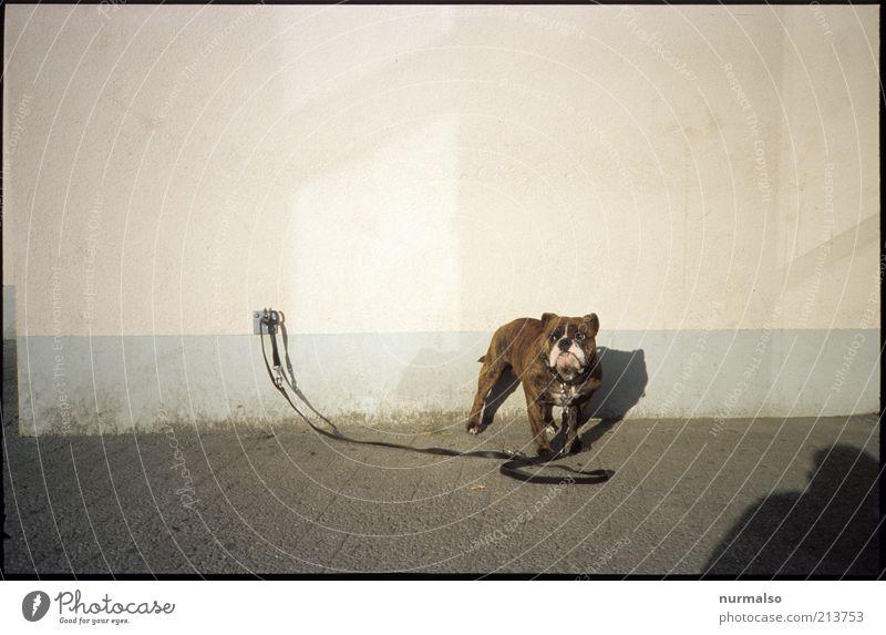 was kuckst du Mensch Einsamkeit Tier Wand Hund Mauer warten Umwelt Platz Freizeit & Hobby skurril Haustier Aggression hässlich Schatten Wege & Pfade