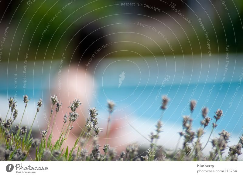 watertight alibi Mensch Frau Natur Jugendliche Ferien & Urlaub & Reisen Pflanze Sommer Blume Erwachsene Umwelt Gras beobachten Schwimmbad Junge Frau Voyeurismus Brennpunkt