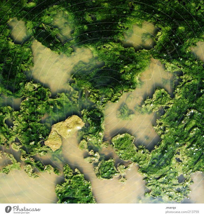 Ursuppe Natur Wasser grün Pflanze braun dreckig Umwelt außergewöhnlich Moos Ekel exotisch durcheinander scheckig Grünpflanze ursprünglich