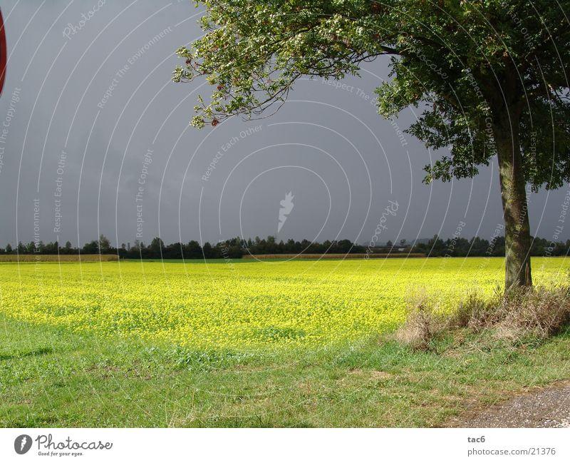 Gewitter im Anmarsch Baum Sonne Wolken dunkel Wiese Feld