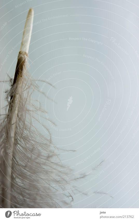 Federleicht weiß Ferien & Urlaub & Reisen Meer Tier ruhig Freiheit hell Hintergrundbild natürlich ästhetisch Spitze weich rein zart