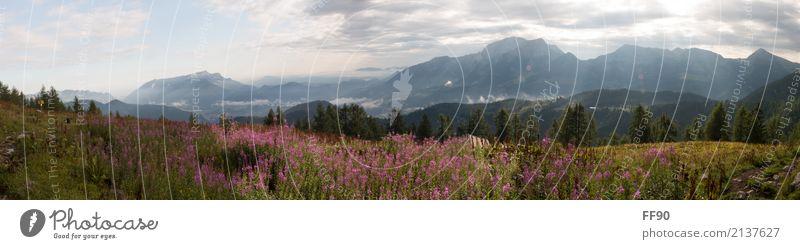 Sommermorgen in den Alpen Ferien & Urlaub & Reisen Tourismus Ausflug Abenteuer Ferne Sommerurlaub Sonne Berge u. Gebirge wandern Umwelt Natur Landschaft Pflanze
