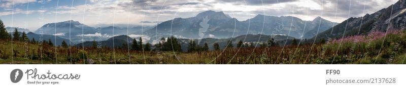 Alpenpanorama Freizeit & Hobby Ferien & Urlaub & Reisen Tourismus Ausflug Abenteuer Ferne Sommer Berge u. Gebirge wandern Umwelt Natur Landschaft Pflanze Tier