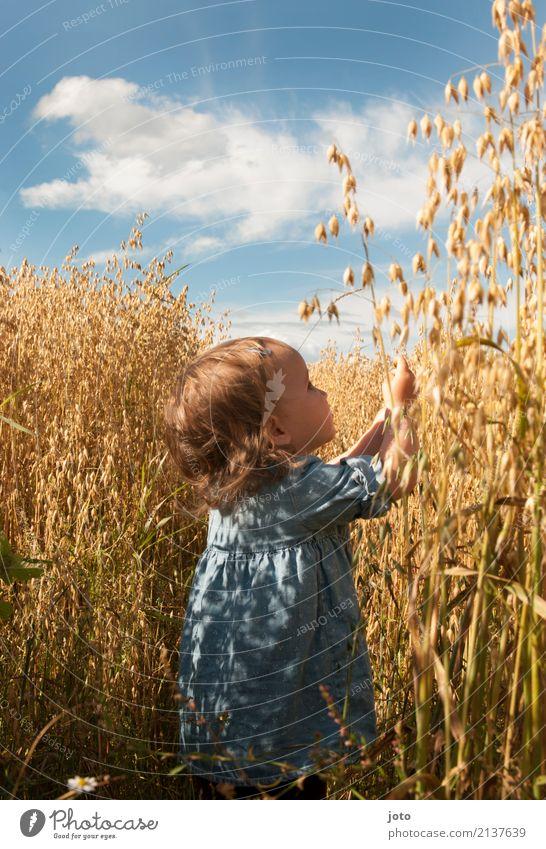 Hafertraum Ferien & Urlaub & Reisen Ausflug Freiheit Sommerurlaub Kind Kleinkind Mädchen 1-3 Jahre Natur Feld entdecken lernen Spielen Neugier Lebensfreude