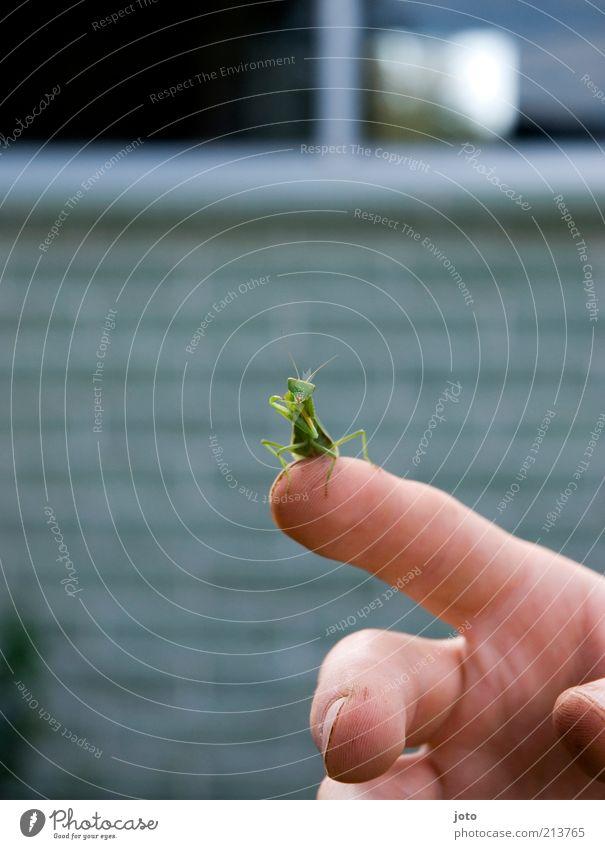 unter Beobachtung... Hand grün Sommer Tier Spielen klein Garten Zufriedenheit sitzen Finger ästhetisch beobachten Reinigen berühren Vertrauen Insekt