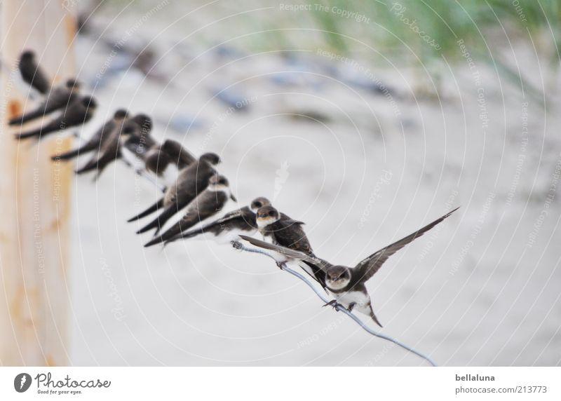 Ready for take off!!! Natur Ferien & Urlaub & Reisen Pflanze Sommer Meer Tier Umwelt Küste Freiheit Sand Vogel Wetter sitzen Schönes Wetter Flügel Tiergruppe