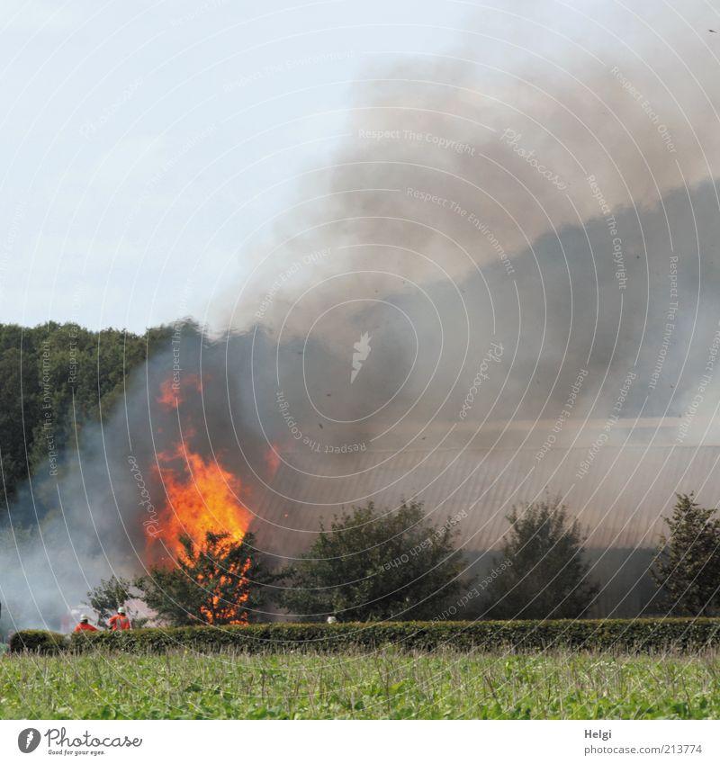 Feuer und Flamme... Mensch Mann Himmel Baum grün Pflanze Sommer gelb grau Gebäude Feld Angst Erwachsene maskulin gefährlich
