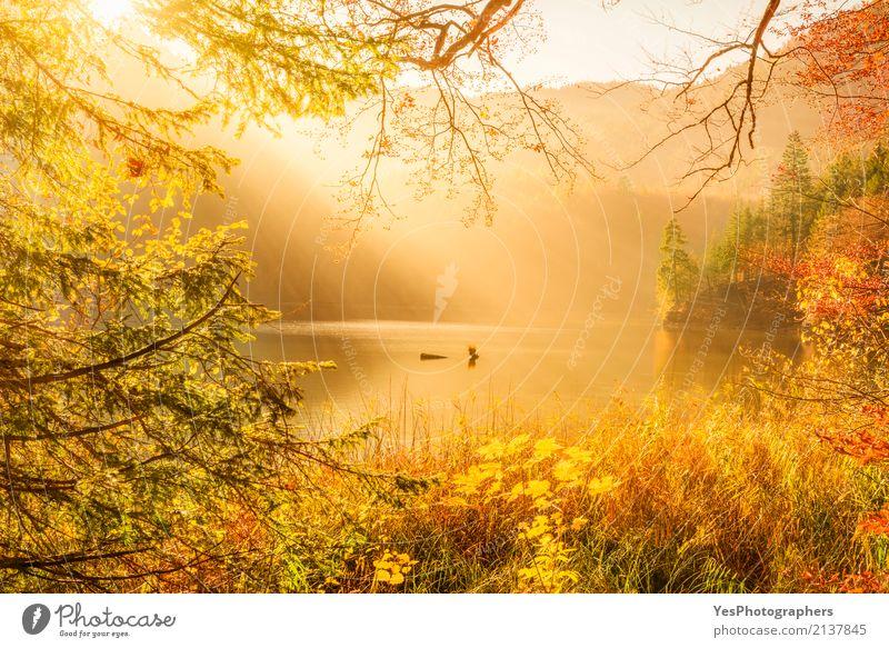 Sonnenstrahlen und Herbst Natur Berge u. Gebirge Landschaft Sonnenlicht Nebel Wärme Baum Blatt Wald See Denken träumen Glück hell natürlich mehrfarbig gelb gold