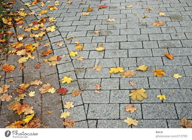 Grau-Gelb Kariert Natur Herbst Wind Blatt gelb Herbstlaub herbstlich Ahornblatt fallen liegen Steinplatten Steinboden grau Stimmung trist Linie eckig Boden