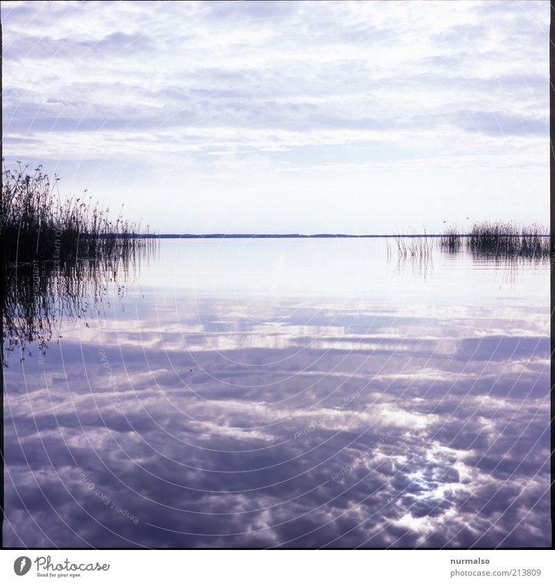 Stille Spüren Natur Wasser Himmel Meer Ferien & Urlaub & Reisen Wolken Ferne träumen See Landschaft Stimmung Küste Wellen glänzend Umwelt Horizont