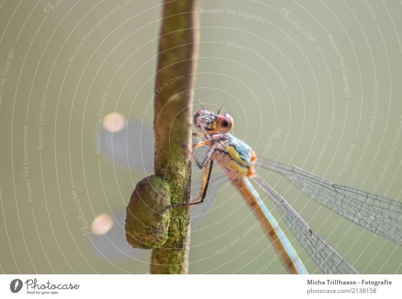 Bunte Libelle Umwelt Natur Tier Sonne Schönes Wetter Pflanze Baum Ast Zweig Wildtier Tiergesicht Flügel Libellenflügel Auge Beine Insekt 1 beobachten fliegen