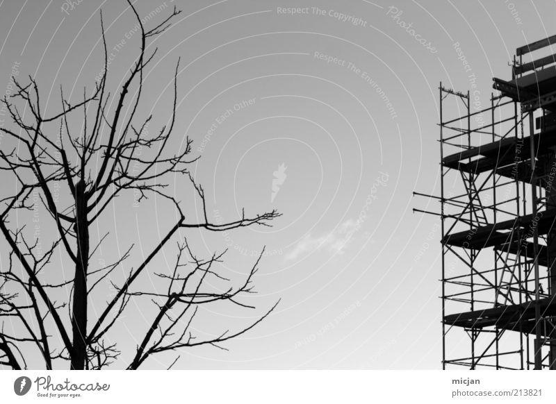 Antithetic |Construction site Hausbau Baustelle Natur Pflanze Luft Himmel Herbst Klimawandel Dürre Baum Stadtrand Hochhaus Bauwerk Gebäude