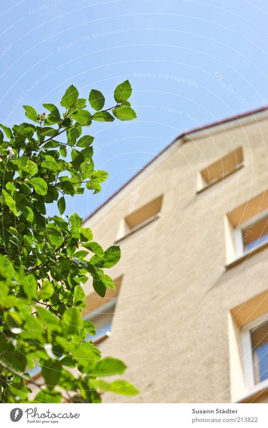 3.OG Sommer Haus Fenster Wand Mauer Fassade hoch Schönes Wetter Blauer Himmel Wolkenloser Himmel Stadthaus Zweige u. Äste Dachgiebel Mehrfamilienhaus