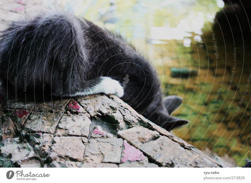 Koschka Tier Katze 1 Tierjunges berühren Blick trinken klein Neugier niedlich mehrfarbig ducken schön Brunnen Wasser Marmor Farbfoto Außenaufnahme Menschenleer