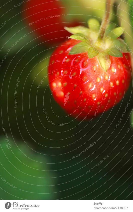 an der Sonne gereift Lebensmittel Frucht Dessert Erdbeeren Ernährung Vegetarische Ernährung Bioprodukte Vegane Ernährung Natur Sommer Pflanze Nutzpflanze Beeren