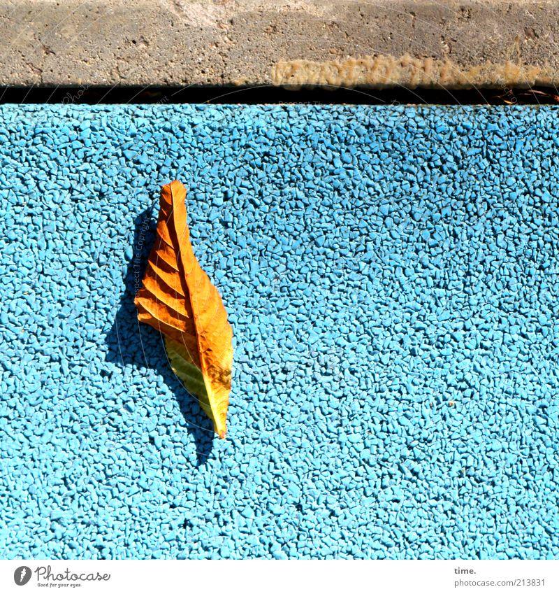 Sommerschlussvorlauf Stein Beton außergewöhnlich Blatt Herbst gold Strukturen & Formen alt modern blau grau Farbe Farbstoff Bürgersteig Bodenbelag Straßenbelag