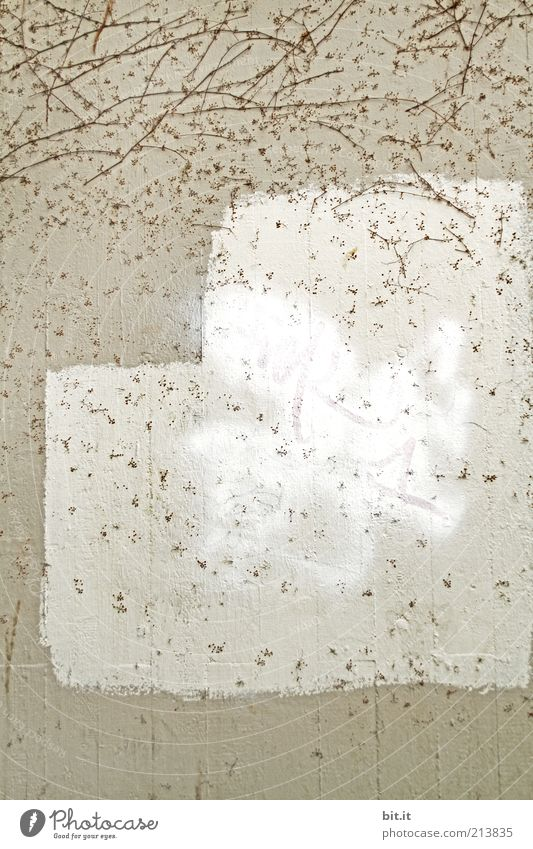unbeschrieben musterhaft Mauer Wand Fassade eckig frei grau weiß Ranke Anstrich Gebäude Putz Strukturen & Formen Oberfläche Lifestyle Stil Design