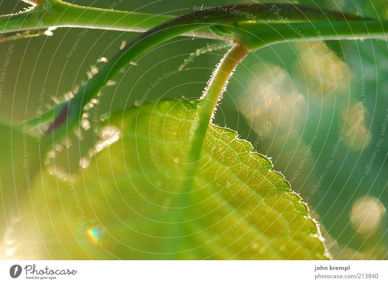 lichtblick Umwelt Natur Pflanze Sommer Baum Blatt leuchten Wachstum schön grün Glück Lebensfreude Frühlingsgefühle Optimismus Kraft Willensstärke