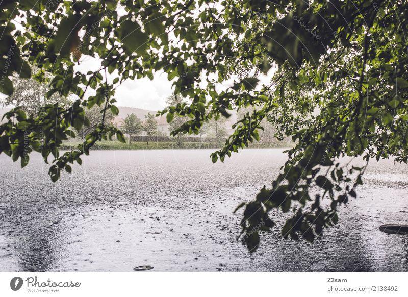 Sauwetter Abenteuer Natur Landschaft Wasser schlechtes Wetter Regen Sträucher Flussufer dunkel frisch kalt natürlich Einsamkeit Endzeitstimmung Idylle Klima