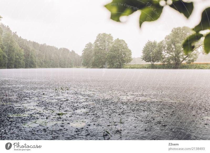 Sommerregen Abenteuer Umwelt Natur Landschaft Wasser Sonne schlechtes Wetter Regen Baum Sträucher Flussufer frisch nachhaltig natürlich feminin Farbe Idylle