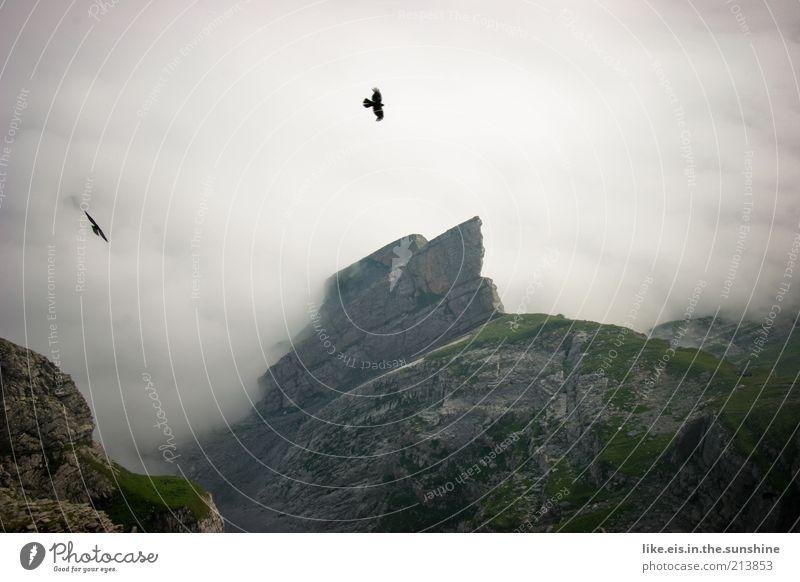 irland? Zufriedenheit Sinnesorgane Erholung ruhig Ausflug Ferne Bergsteigen Umwelt Natur Landschaft Urelemente Wolken Sommer Klima Nebel Felsen Alpen