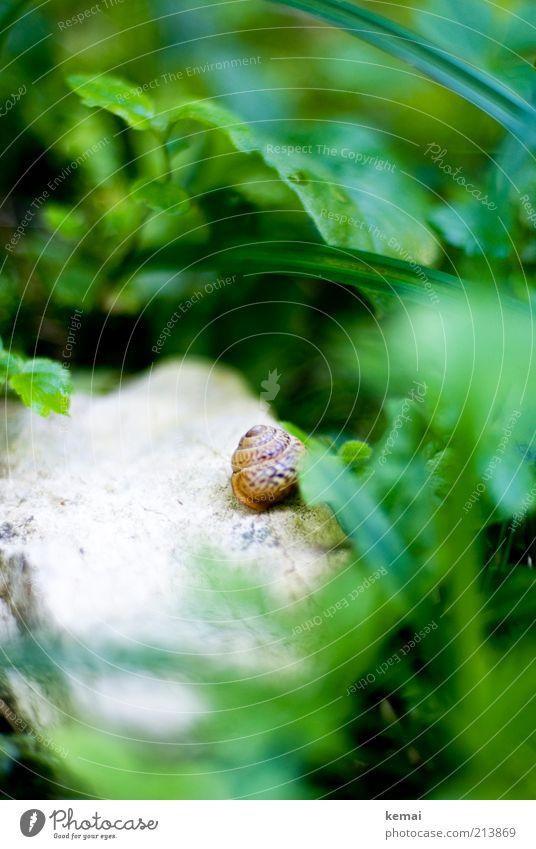 Waldschneckenhaus Natur grün Pflanze Sommer Blatt Tier Gras Stein klein Umwelt nass Sträucher Wildtier Schönes Wetter Schnecke Grünpflanze