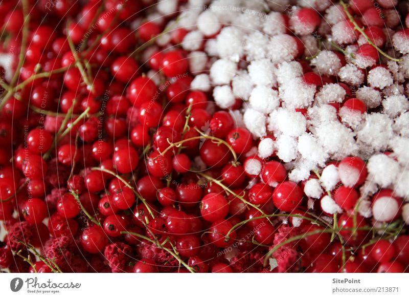 Halbgefrorenes Lebensmittel Frucht Sommer Schnee frieren rund saftig sauer süß rot weiß kalt Johannisbeeren Eis Himbeeren gekühlt Beeren lecker Gesundheit