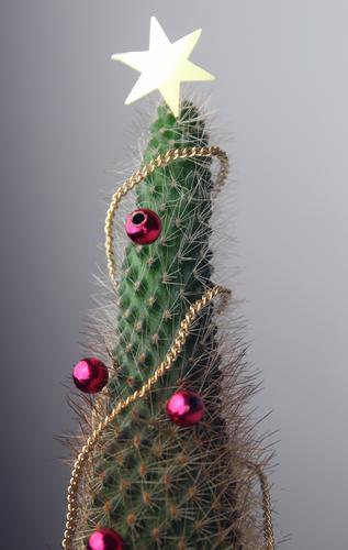 Weihnachten mal anders Lifestyle Design exotisch Dekoration & Verzierung Feste & Feiern Weihnachten & Advent Subkultur Winter Pflanze Kaktus Kitsch Krimskrams