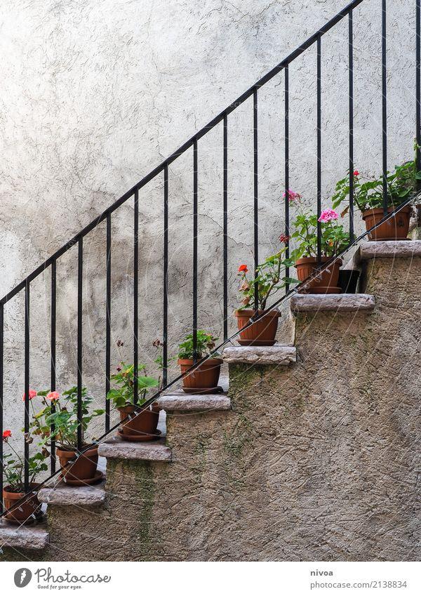 blumentreppe Freizeit & Hobby Ferien & Urlaub & Reisen Ausflug Umwelt Natur Pflanze Blume Blatt Blüte Italien Mauer Wand Treppe Treppengeländer Blumentopf Stein