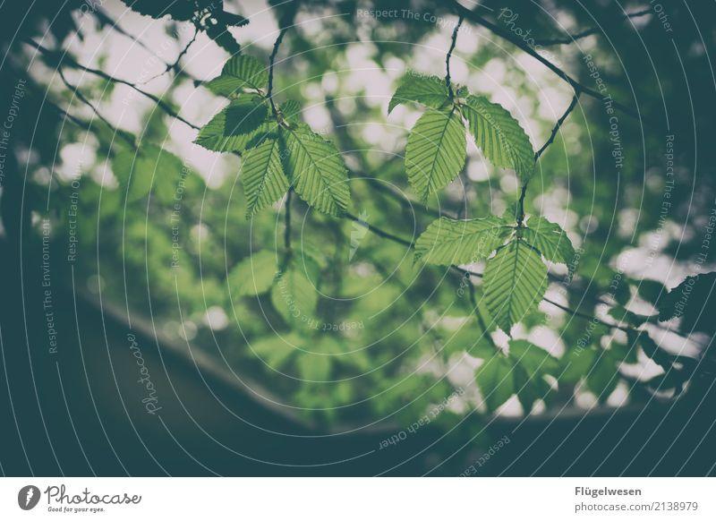Blätterdach Lifestyle Freizeit & Hobby Ferien & Urlaub & Reisen Tourismus Ausflug Abenteuer Ferne Freiheit Sommer Sommerurlaub Umwelt Natur Landschaft Pflanze