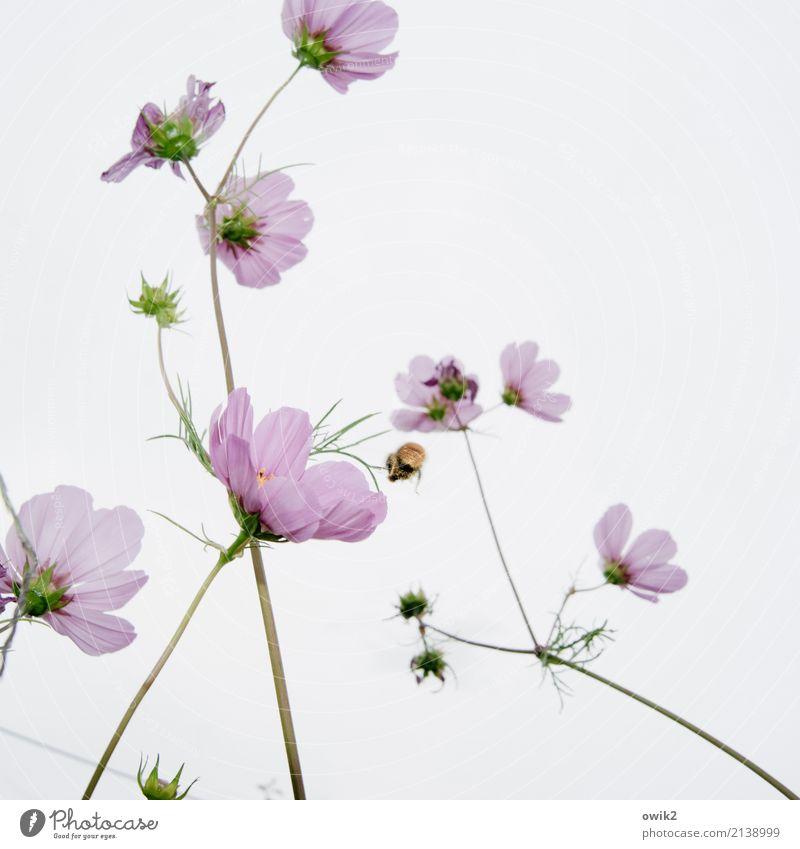 Sammelstelle Natur Pflanze grün Landschaft Tier Umwelt Blüte natürlich klein Garten fliegen rosa Arbeit & Erwerbstätigkeit elegant Idylle authentisch
