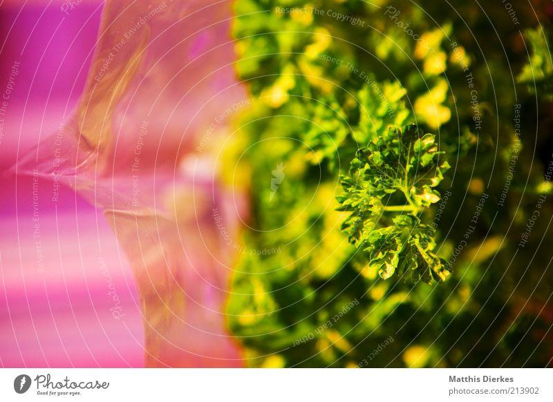 Peters Silie Ernährung Gesundheit Lebensmittel Papier ästhetisch Kräuter & Gewürze Gemüse lecker Pflanze Verpackung Petersilie Verpackungsmaterial