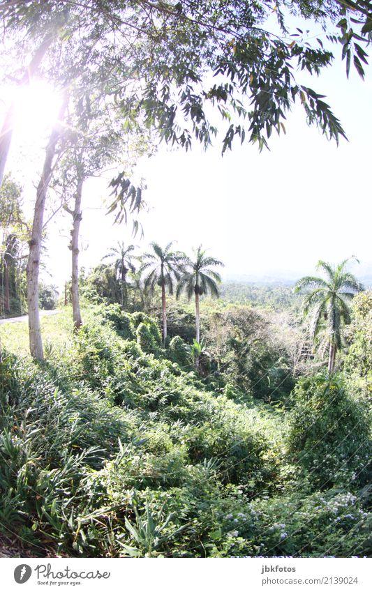 viva la cuba Freizeit & Hobby Ferien & Urlaub & Reisen Tourismus Abenteuer Ferne Freiheit Sommerurlaub Insel Berge u. Gebirge Kuba Umwelt Natur Landschaft
