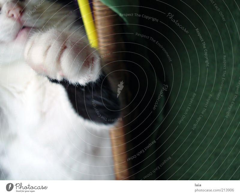cat blessing Haustier Katze 1 Tier Bewegung Erholung genießen Kommunizieren liegen schlafen Spielen Freundlichkeit Glück kuschlig natürlich niedlich positiv