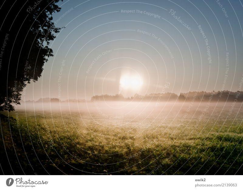 Grund zum Grübeln Umwelt Natur Landschaft Wolkenloser Himmel Horizont Frühling Schönes Wetter Baum Gras Autofenster Glas leuchten hell doppelt gemoppelt