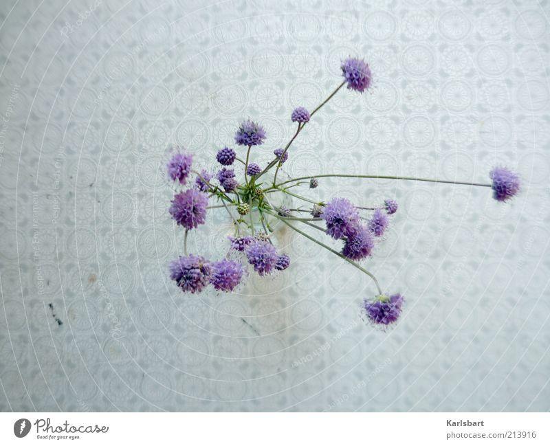 durch. die blume. schön Blume Pflanze Sommer ruhig Stil Blüte Frühling Design Tisch Lifestyle violett Dekoration & Verzierung Blumenstrauß Vogelperspektive Perspektive