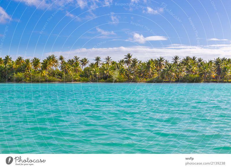 Palmen am Strand von Isla Saona exotisch Erholung Ferien & Urlaub & Reisen Tourismus Sommer Sonne Meer Insel Wasser blau türkis weiß Idylle Karibik