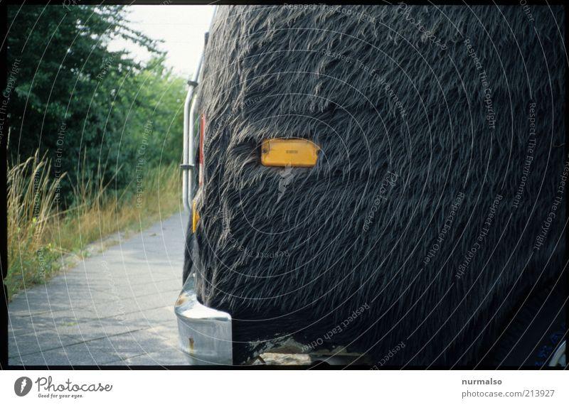 anders geartet Stil Kunst Design elegant Verkehr verrückt Lifestyle retro einzigartig außergewöhnlich Fell Zeichen trashig Bus Skulptur