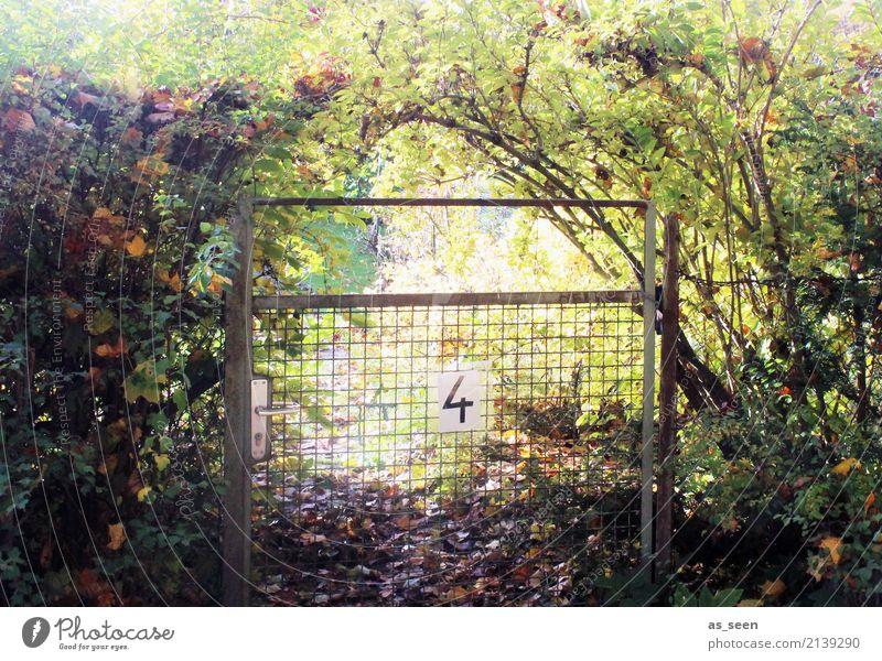 Verwunschen Wellness harmonisch ruhig Freizeit & Hobby Garten Erntedankfest Umwelt Natur Pflanze Sommer Herbst Klima Schönes Wetter Hecke Ast Blatt